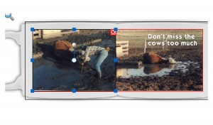 a mug showing a cow stuck in the mud